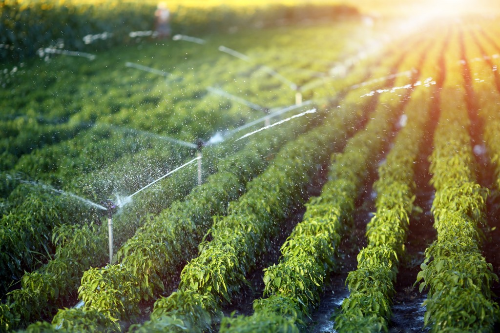Learn About the Different Irrigation Types